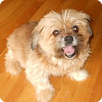 Adopt A Pet :: alex - dewey, AZ