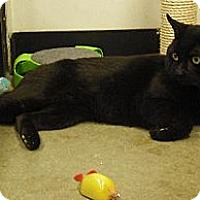 Adopt A Pet :: Cardigan - Wakefield, MA