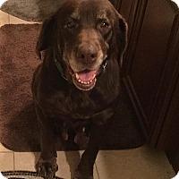 Adopt A Pet :: Casey #4 - Purcellville, VA