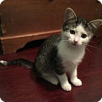Adopt A Pet :: Fowler - Chicago, IL