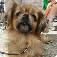 Adopt A Pet :: Sonja - Clifton, TX