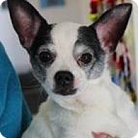 Adopt A Pet :: Webster - Columbia, SC