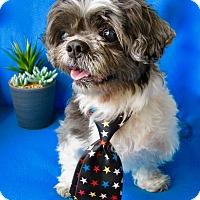Adopt A Pet :: Tobi - Irvine, CA
