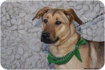 German Shepherd Dog Mix Dog for adoption in Newcastle, Oklahoma - Chet