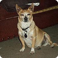 Adopt A Pet :: Bruno - Nuevo, CA