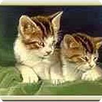 Adopt A Pet :: Kitten Availability - Merrifield, VA