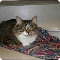 Adopt A Pet :: Troy: GORGEOUS BOY! - Quincy, MA