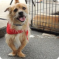 Adopt A Pet :: Saint - Houston, TX