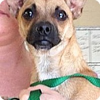Adopt A Pet :: Doug - Providence, RI