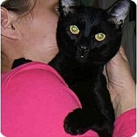 Adopt A Pet :: Gentle Ben - New York, NY