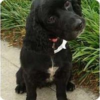 Adopt A Pet :: Piper Kate - Sugarland, TX