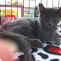 Adopt A Pet :: Finn - Cocoa, FL