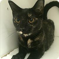 Adopt A Pet :: Katie Holmes - Richboro, PA