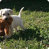 Adopt A Pet :: Moet - Destrehan, LA