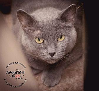 Domestic Shorthair Cat for adoption in Belton, Missouri - Joney