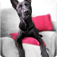 Adopt A Pet :: Channing - Pascagoula, MS