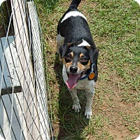 Adopt A Pet :: Trent - Tallahassee, FL
