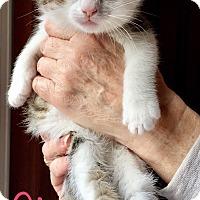 Adopt A Pet :: Gia - Island Park, NY