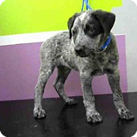 Adopt A Pet :: EMILY - Houston, TX