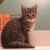 Adopt A Pet :: Aladdin - Smyrna, GA