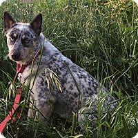 Adopt A Pet :: Frieda - Paso Robles, CA