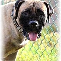 Adopt A Pet :: Vincent