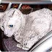 Adopt A Pet :: Elizabeth - Scottsdale, AZ