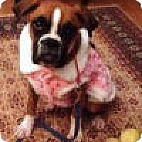 Adopt A Pet :: Pixie - Sunderland, MA