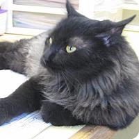 Adopt A Pet :: Persephone - Lake Charles, LA