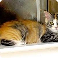 Adopt A Pet :: Molly - Davis, CA