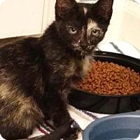 Adopt A Pet :: Glory - Merrifield, VA