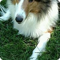 Adopt A Pet :: Cleo - COLUMBUS, OH