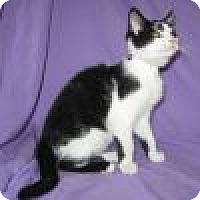 Adopt A Pet :: Sailor - Powell, OH