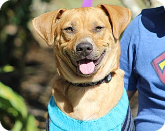Hound (Unknown Type) Mix Dog for adoption in Ocean Springs, Mississippi - PeeWee