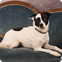 Adopt A Pet :: Midge - Salem, OR
