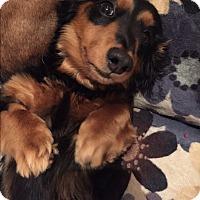 Adopt A Pet :: Heath Bar - Decatur, GA