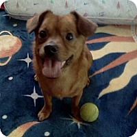 Adopt A Pet :: Butters - North Hollywood, CA