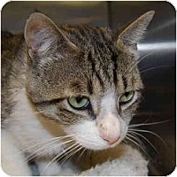 Adopt A Pet :: Sam - Modesto, CA