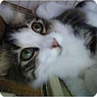Adopt A Pet :: Bess - Oakland Park, FL