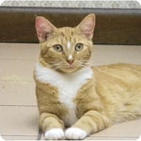 Adopt A Pet :: Clementine - Naples, FL