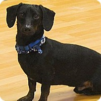 Adopt A Pet :: Prancer - Chesterfield, VA