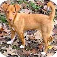 Adopt A Pet :: DEE DEE - Wakefield, RI