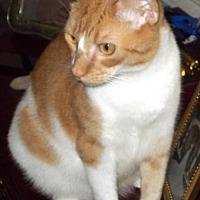Adopt A Pet :: SQUEAKY - DeLand, FL
