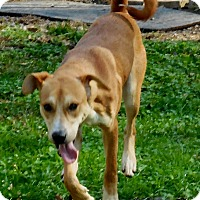 Adopt A Pet :: Hammy - Salem, WV