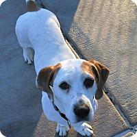 Adopt A Pet :: Myrtle - St. Charles, IL