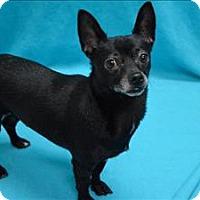 Adopt A Pet :: Baby Buddy - Portland, OR