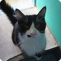 Adopt A Pet :: Emmit - Coos Bay, OR