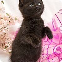 Adopt A Pet :: Charity - Bristol, CT