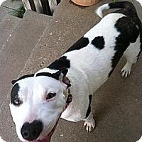 Adopt A Pet :: Ali - Blanchard, OK