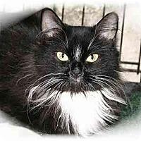 Adopt A Pet :: Morgan - Montgomery, IL